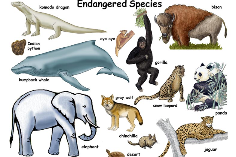 Endangered Species Day  May